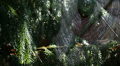 spiderweb, autumn