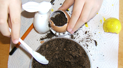 soil in egg pots